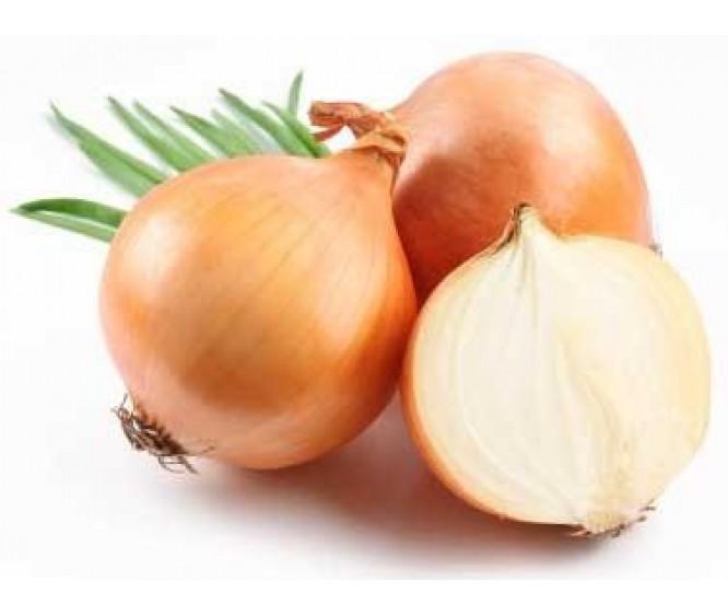 Yellow Onion Medium Holland