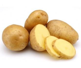 Holland Potato Unwashed China