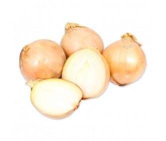 Yellow Onion Large Holland