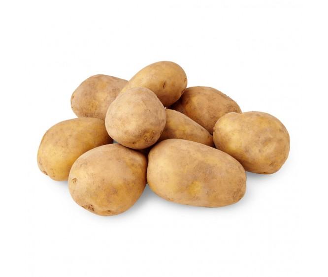 Dutch Table Potato Holland